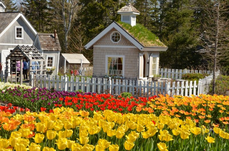 The Tulips Are In Bloom At Coastal Maine Botanical Gardens, Just In Time  For Maine Days, Where Maine Residents Are Admitted Free. Courtesy Of Kris  Folsom