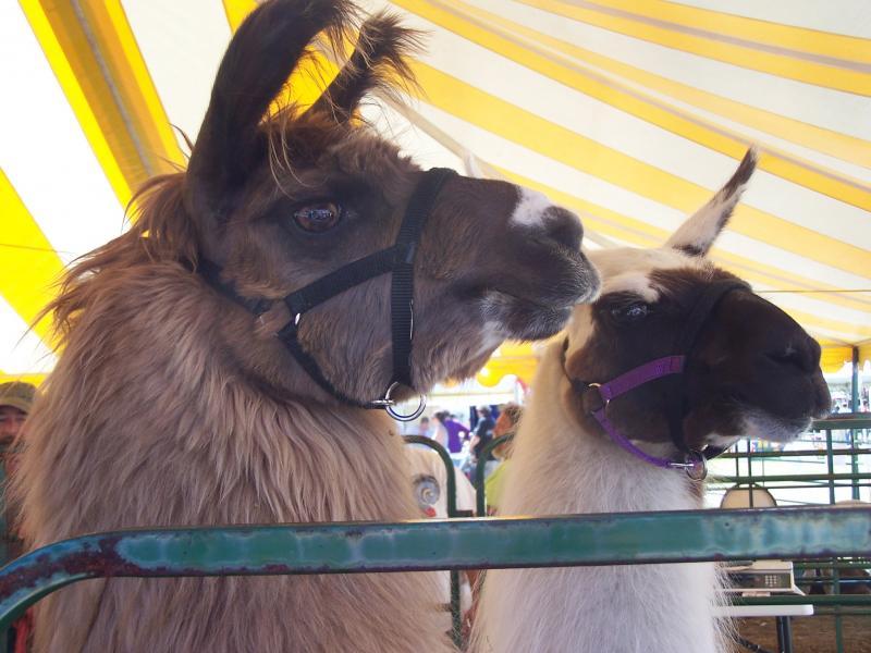 Maine fair season starts July 3 in Houlton | Boothbay Register