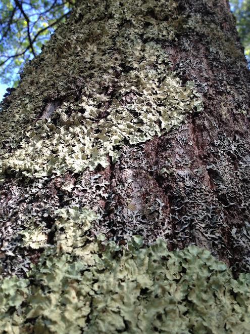 lichen and algae relationship trust