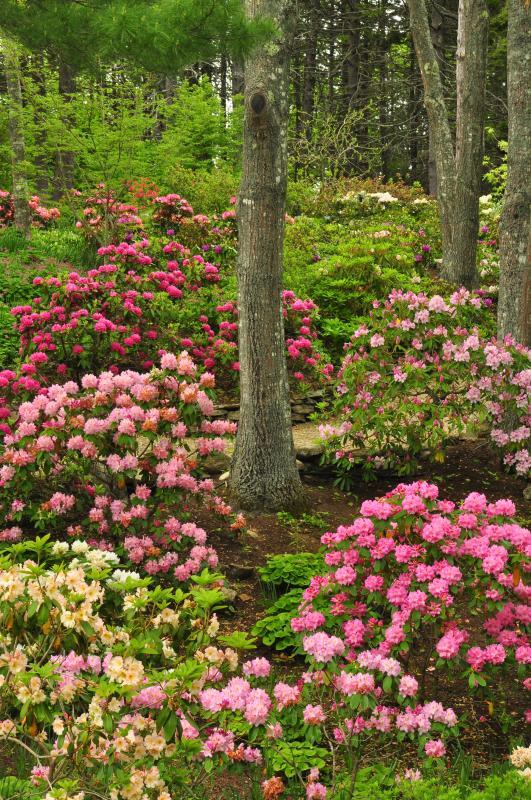 Botanical Gardens Offers Rhodendron Workshop Boothbay Register