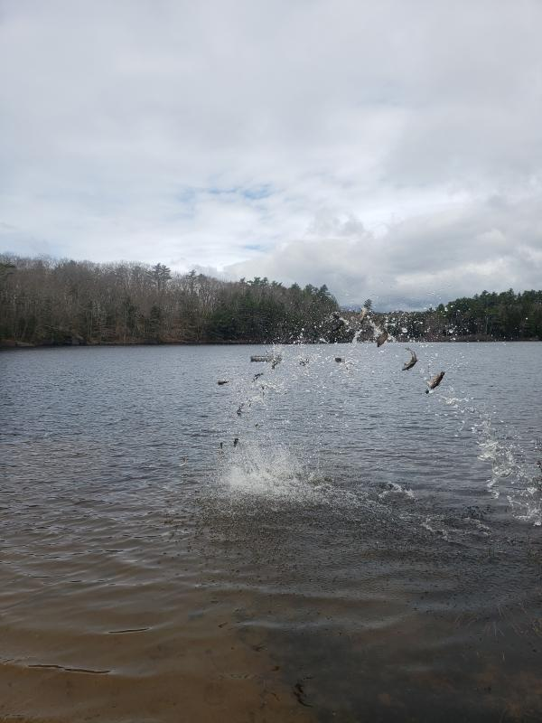 The fish are in - literally | Boothbay Register