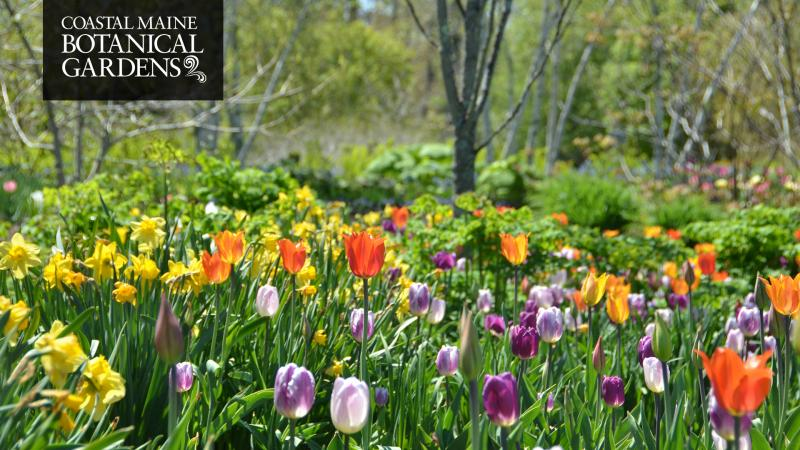 Coastal Maine Botanical Gardens Promo Code