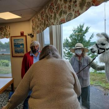 Lincoln Home Assisted Living Damariscotta Apifera Farm Llama