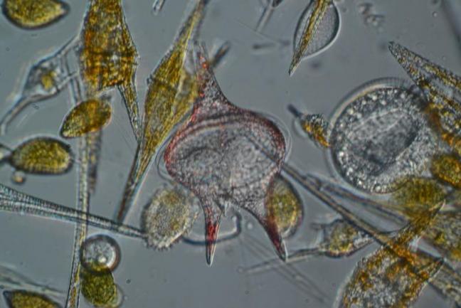 Bigelow Laboratories  image