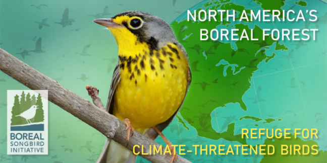 boreal songbird initiative, Jeff Wells, climate and birds