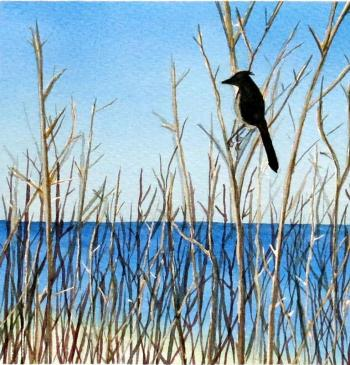 """JAY AT PFEIFFER,"" watercolor on paper by Nancy Rogers, 2013."