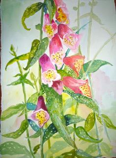 Virginia Forrest, Wiscasset ME artist