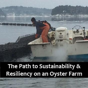 oyster farming, maine, aquaculture, climate change, discussion, business, science