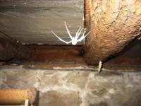 Moldy Spider | Creepy Basement | Evergreen Home Performance | Maine